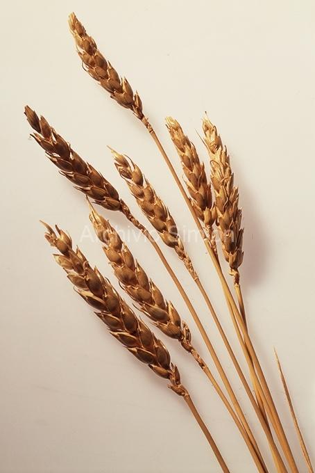 Cereali-e-pasta-005
