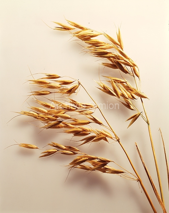 Cereali-e-pasta-006