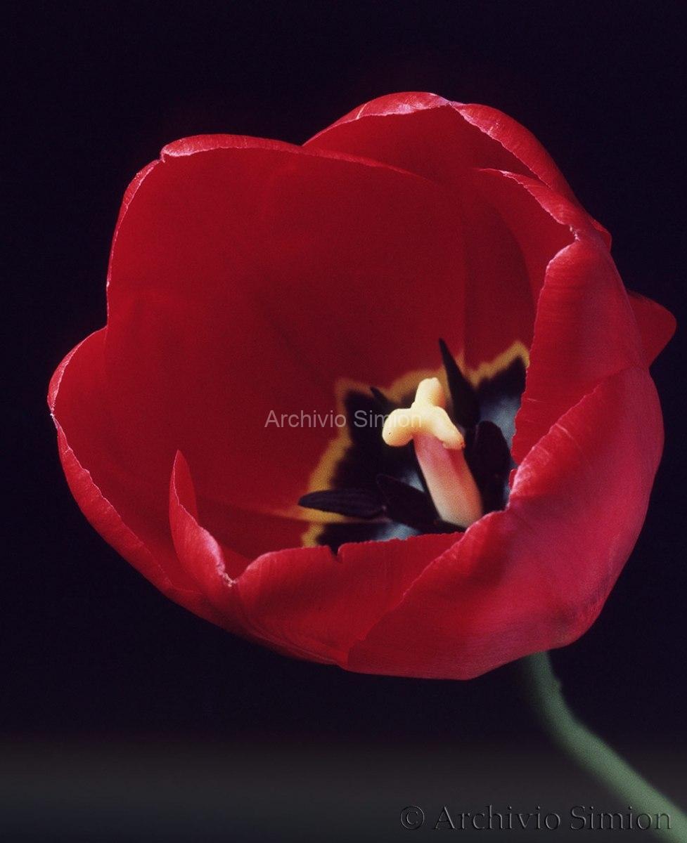 Botanica-fiori-22