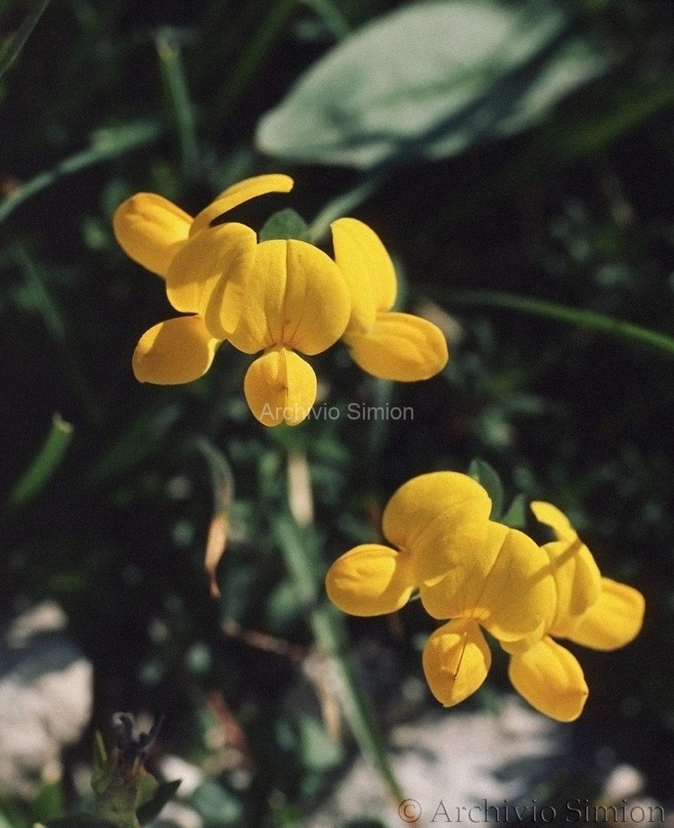 Botanica-fiori-26