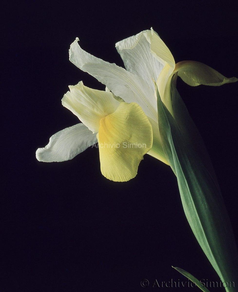 Botanica-fiori-28