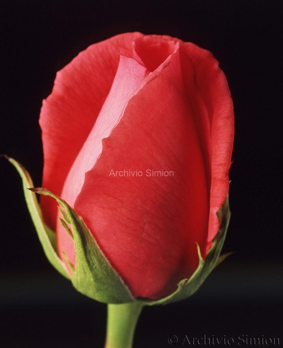 Botanica-fiori-31