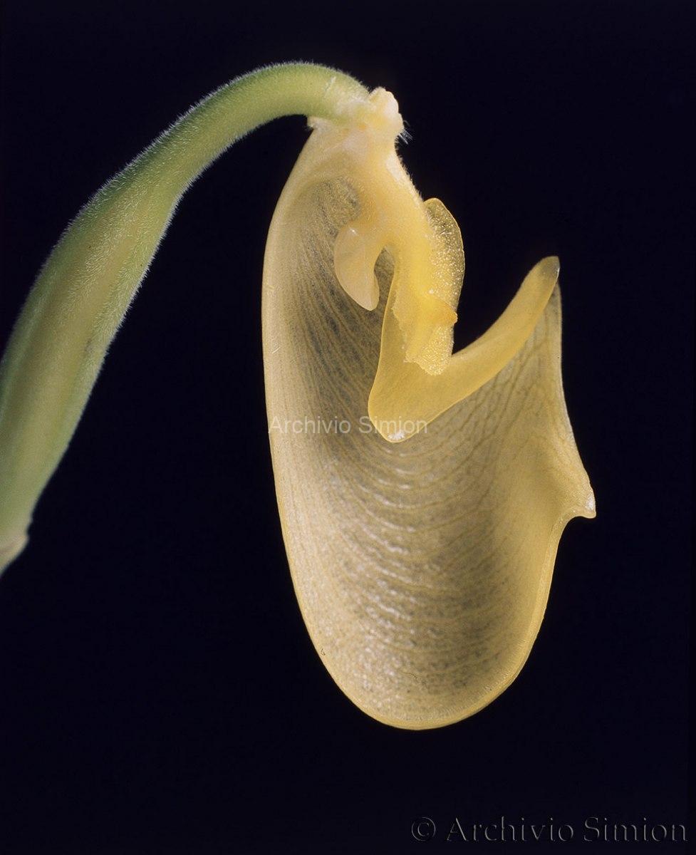 Botanica-fiori-36