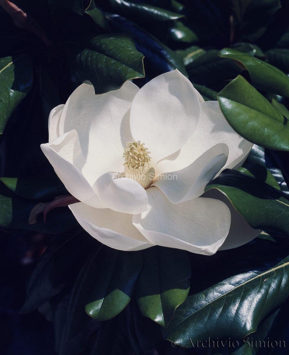 Botanica-fiori-37