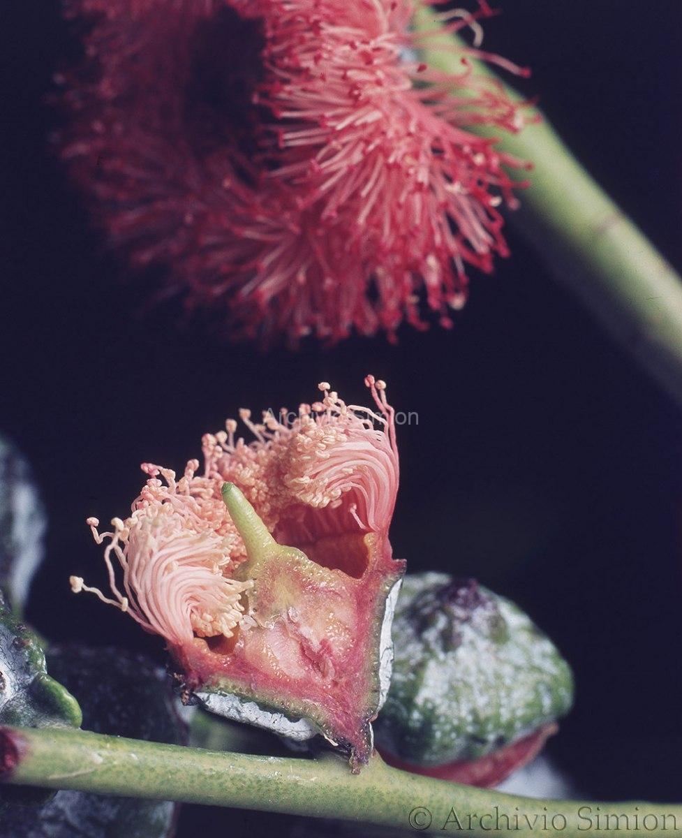 Botanica-fiori-44