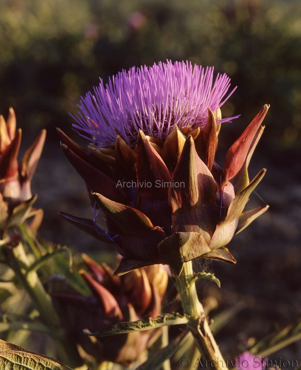 Botanica-fiori-45