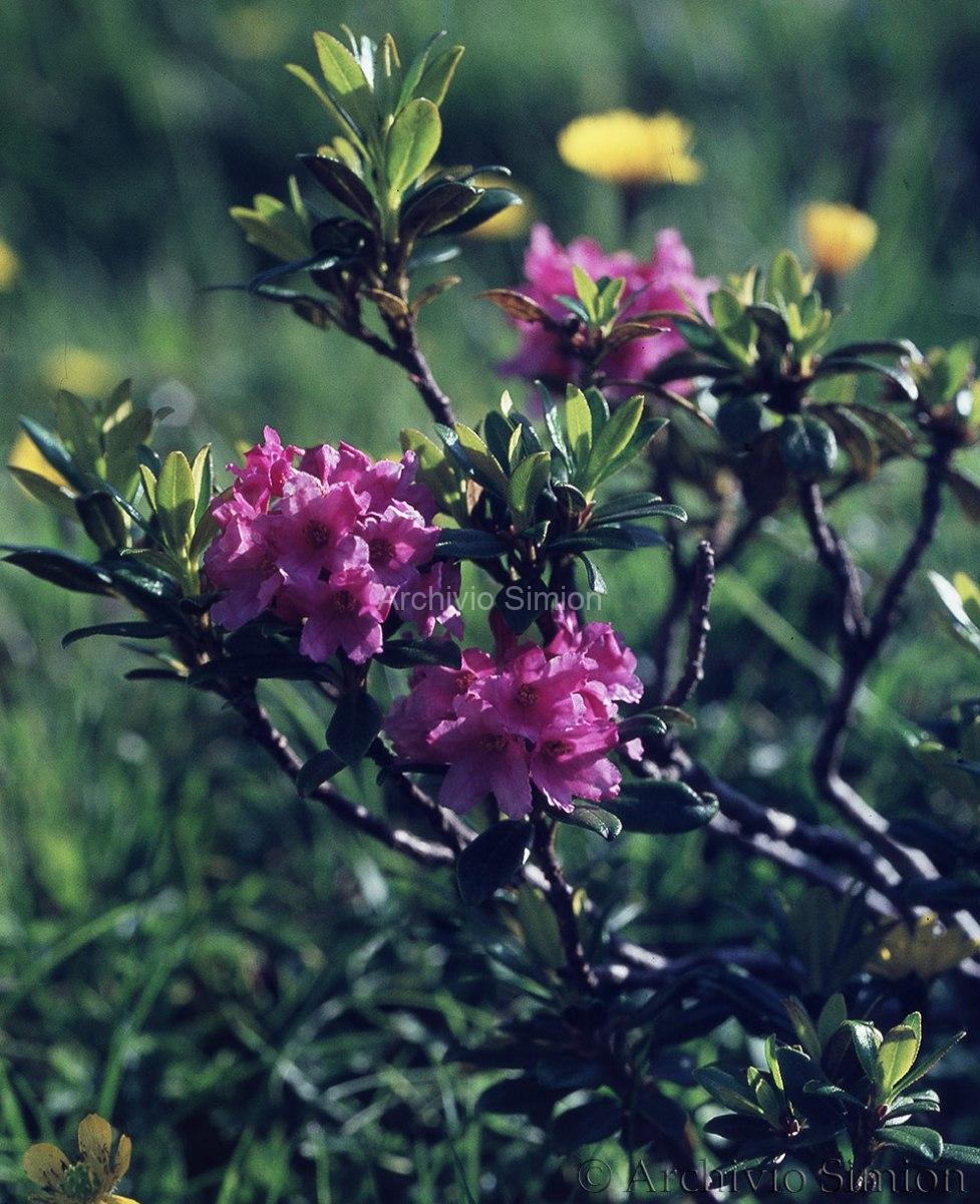 Botanica-fiori-46