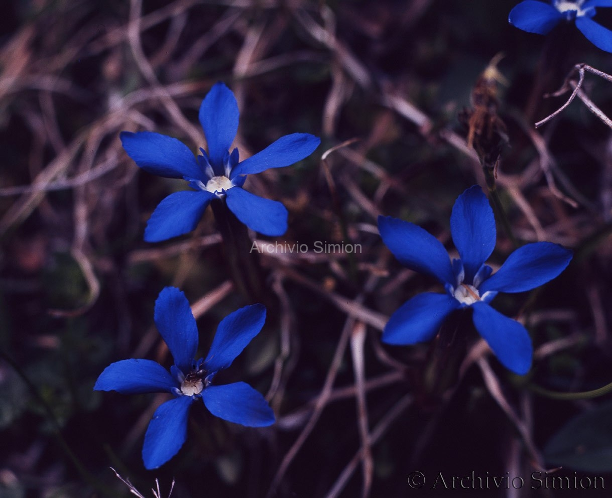 Botanica-fiori-49