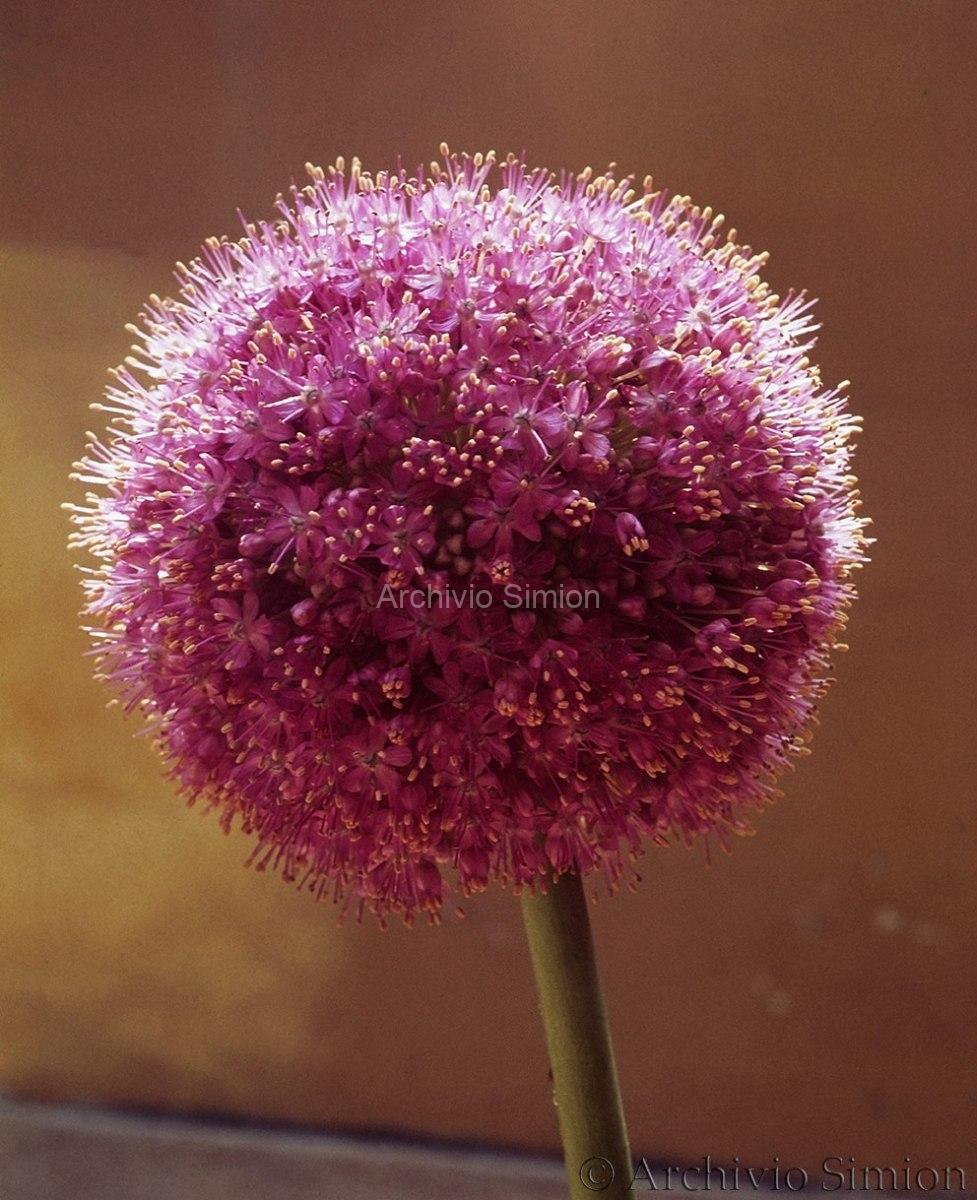 Botanica-fiori-50