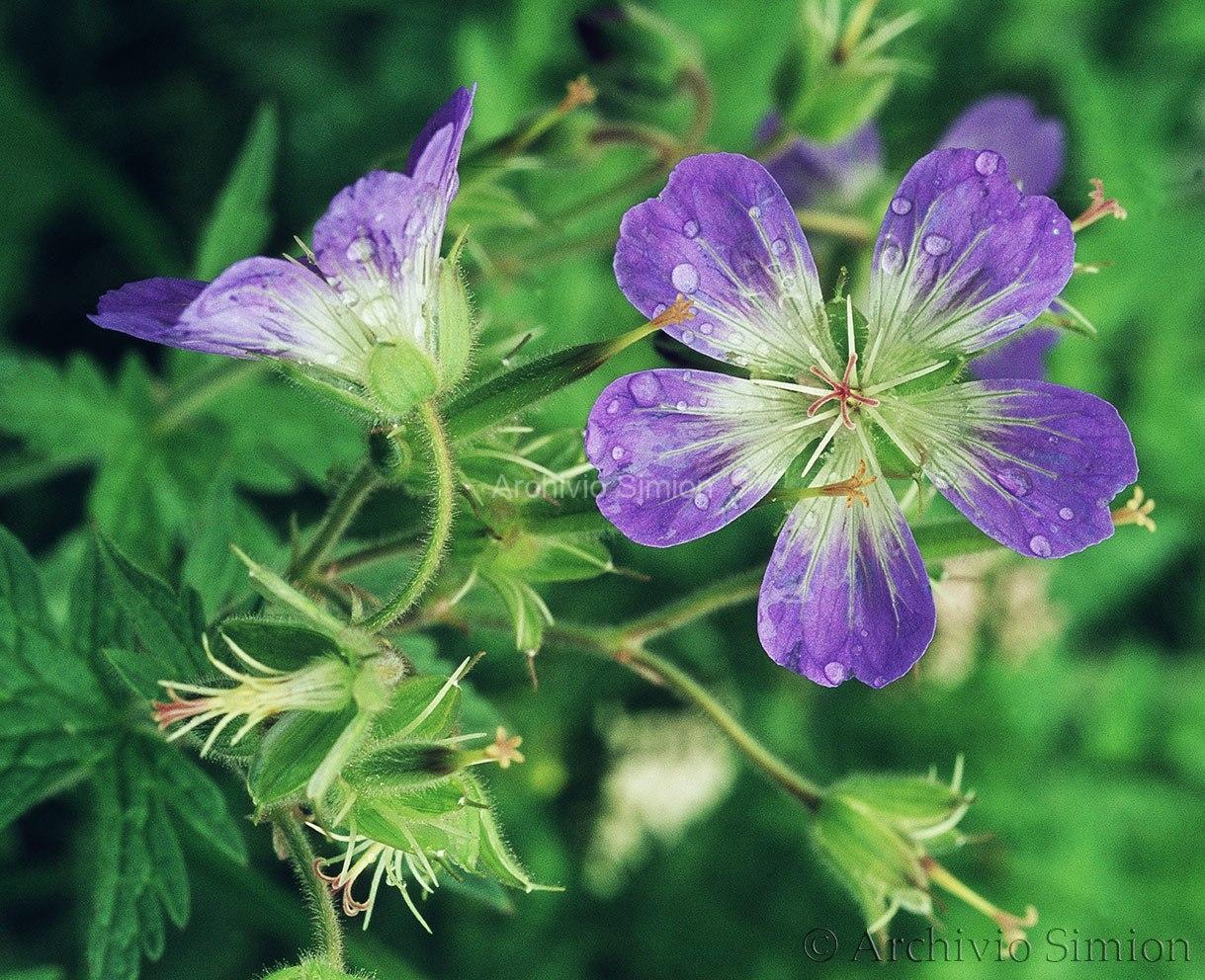 Botanica-fiori-53