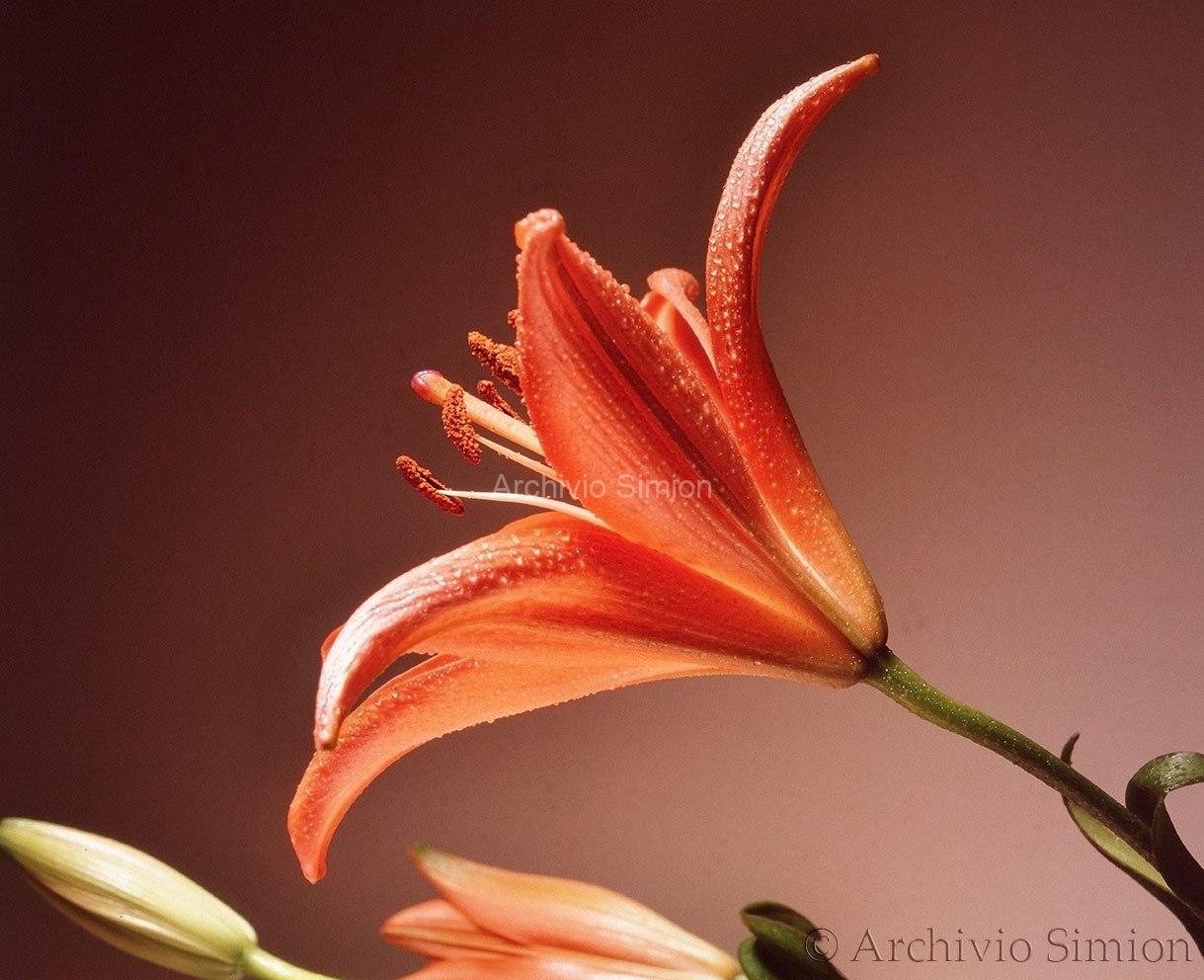 Botanica-fiori-57