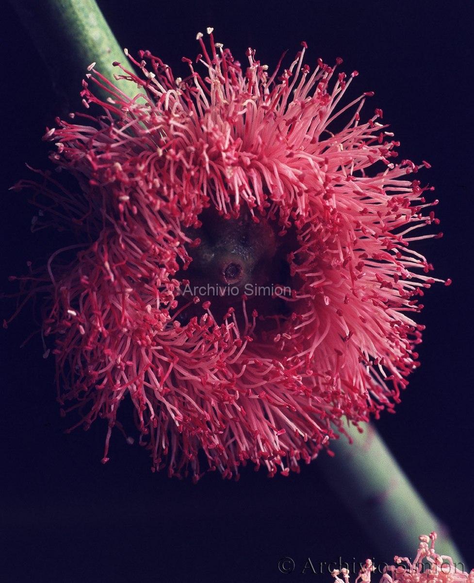 Botanica-fiori-58