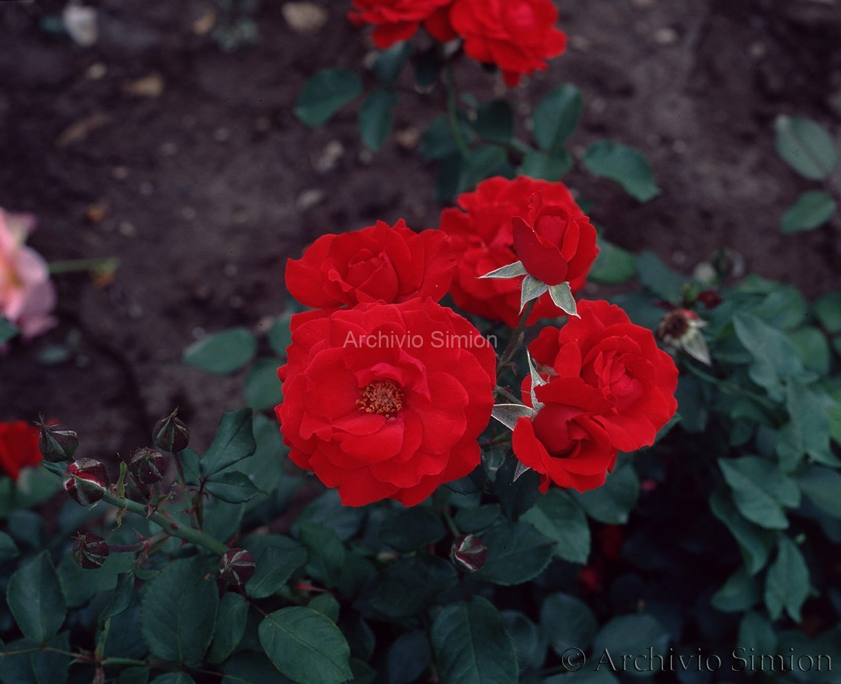 Botanica-fiori-61