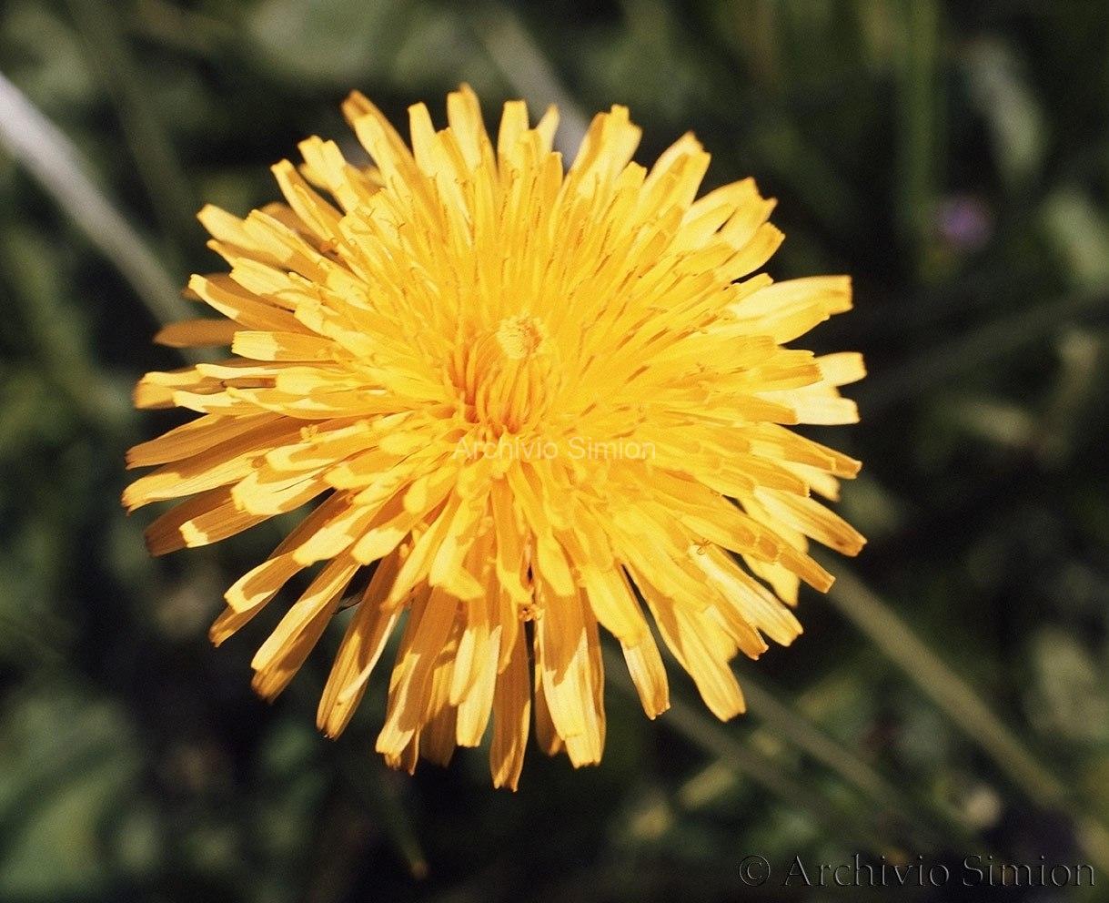 Botanica-fiori-62