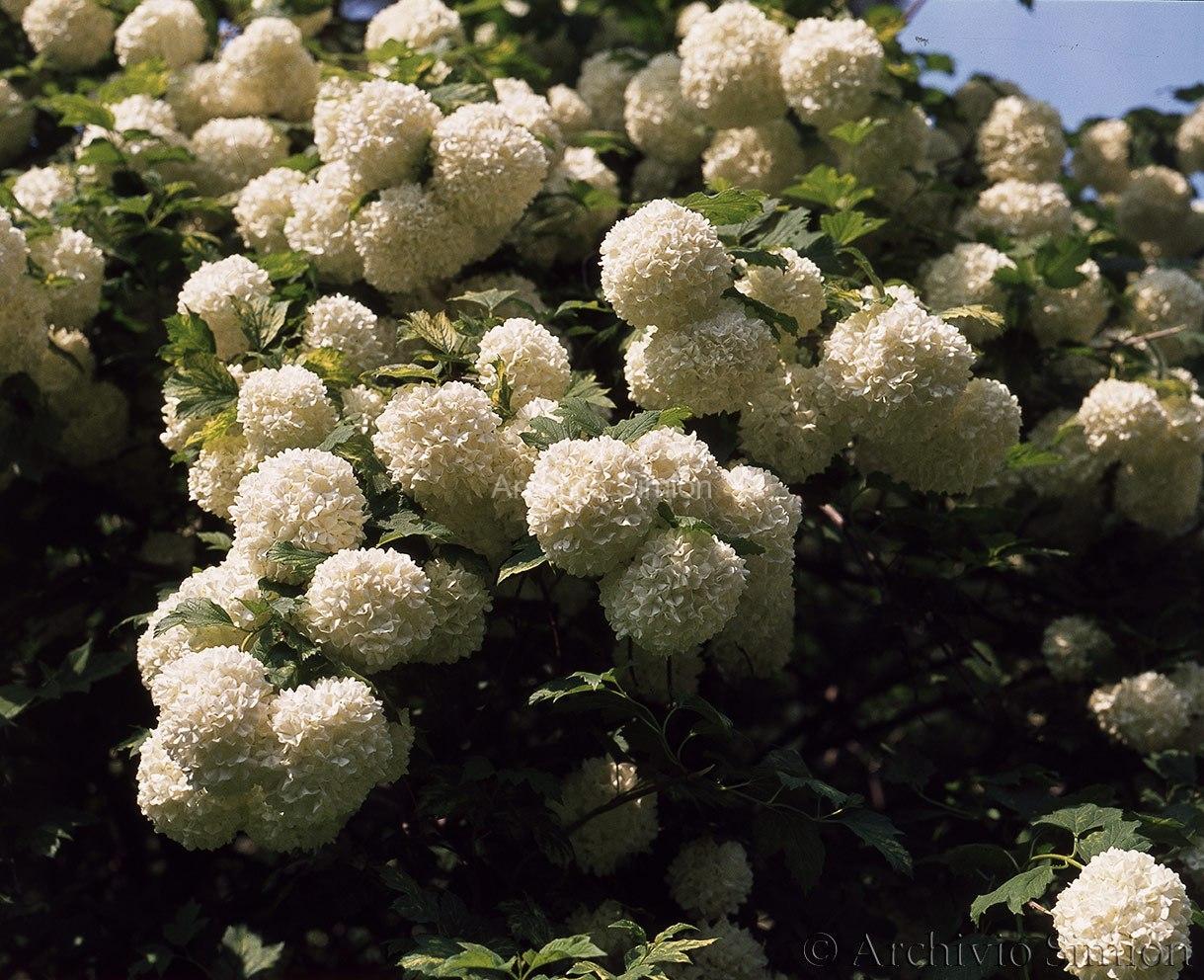 Botanica-fiori-63