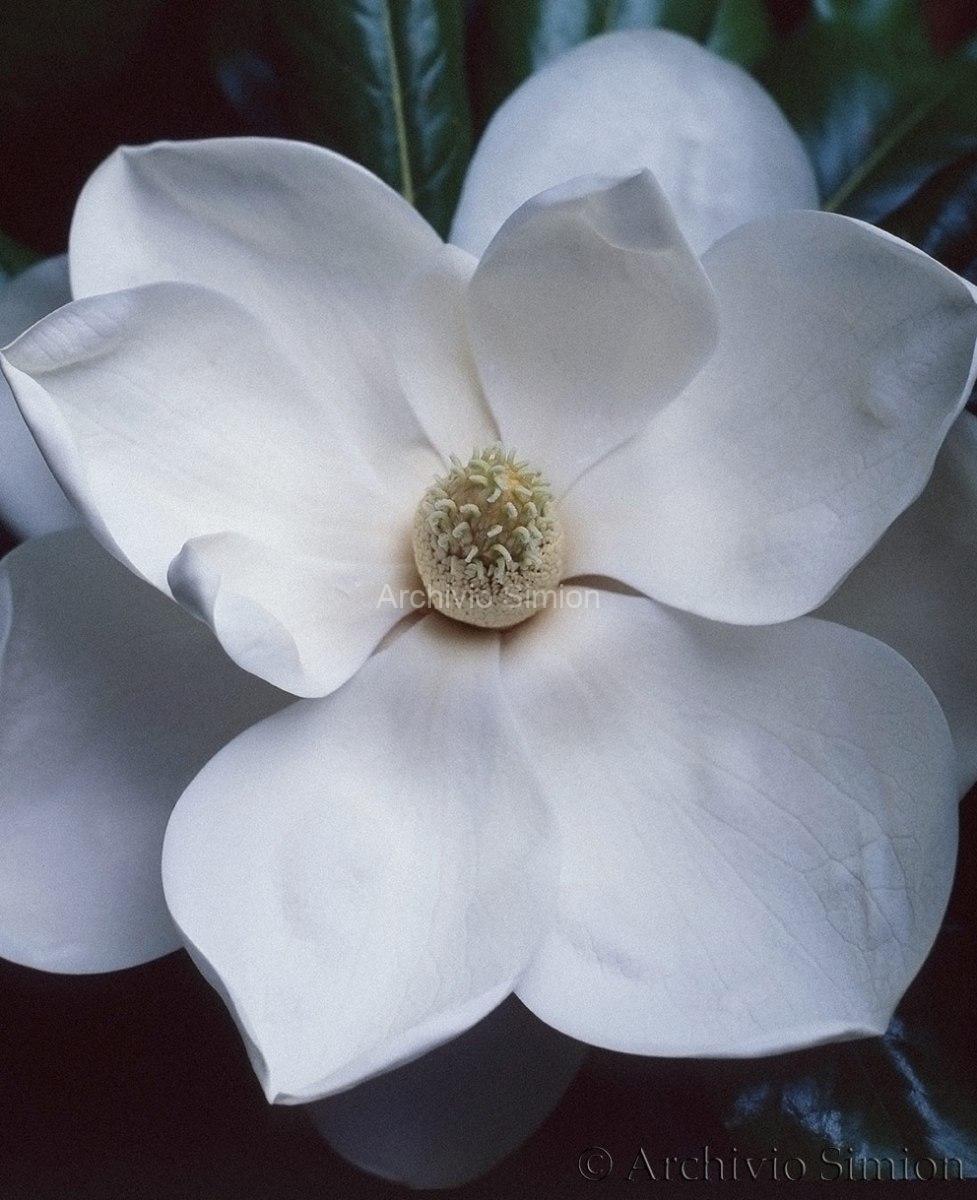 Botanica-fiori-64