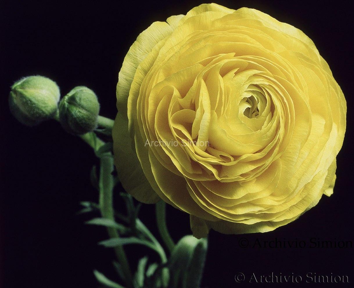 Botanica-fiori-69