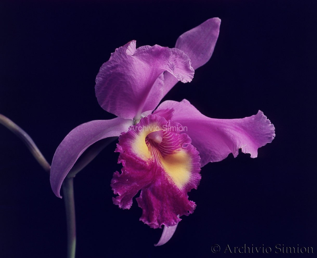 Botanica-fiori-72