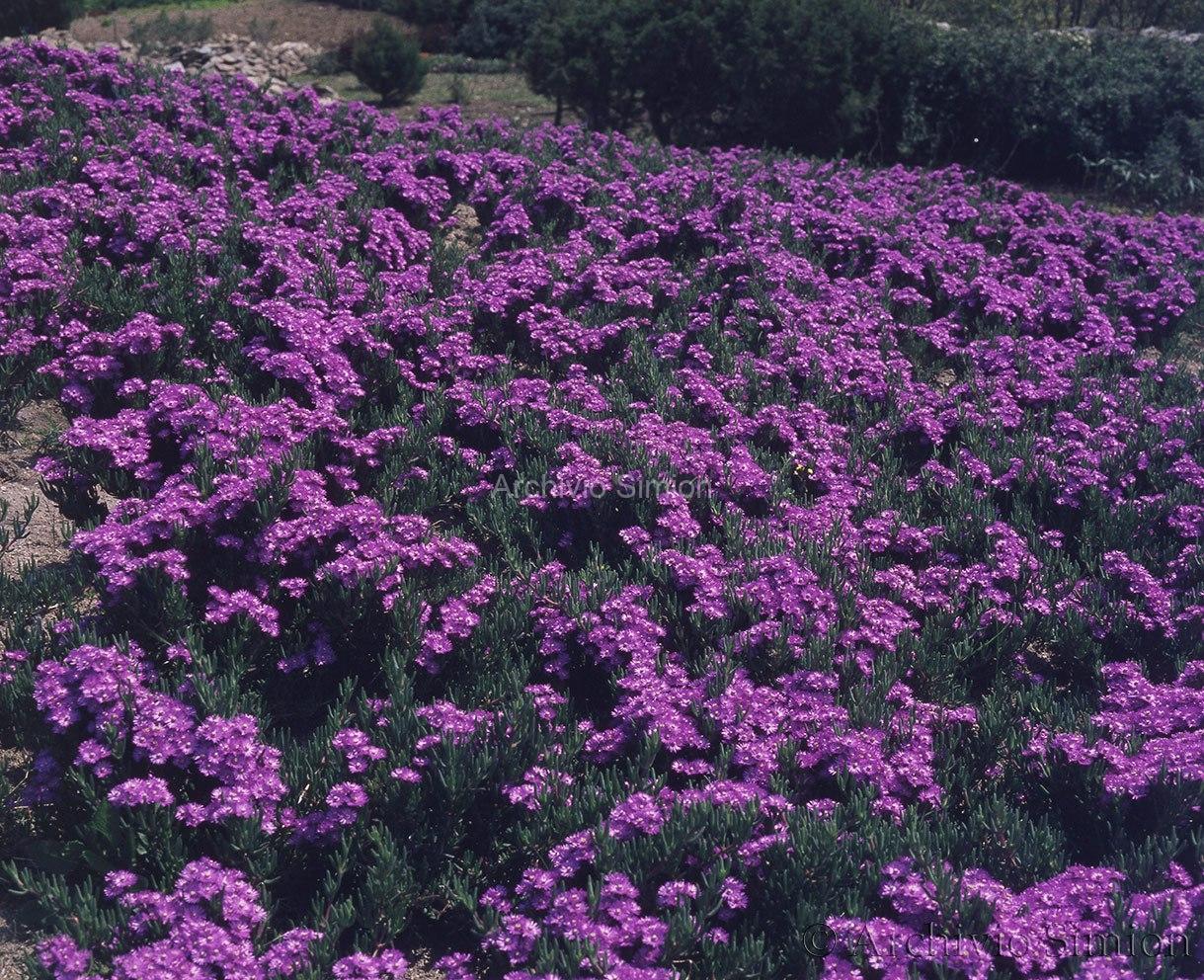 Botanica-fiori-73
