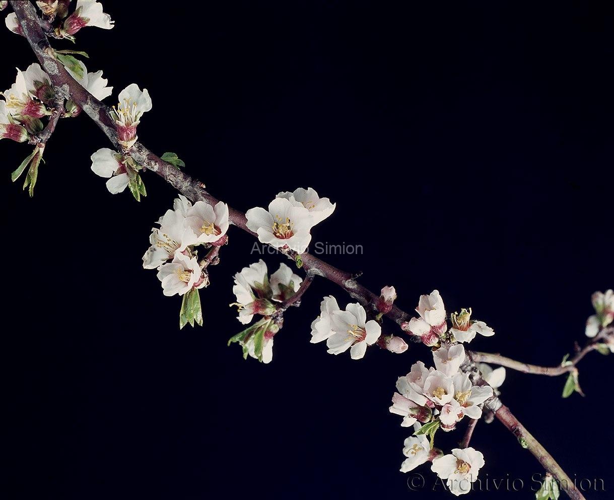 Botanica-fiori-75
