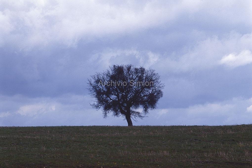 Archivio-Simion-Montagna-07